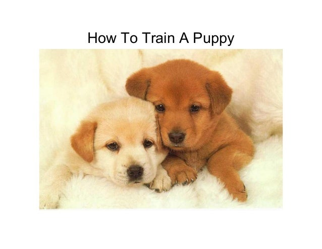 How To Train A Puppy 1225