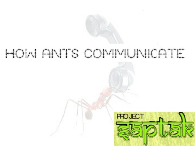 How ants communicate.