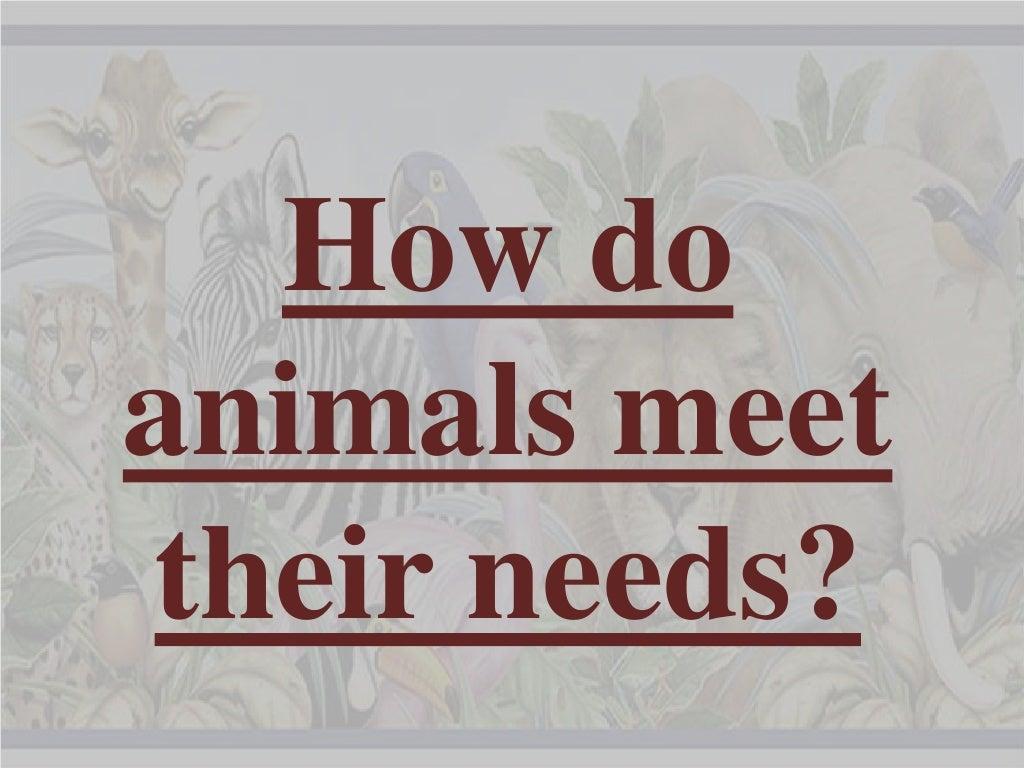How do animals meet their needs