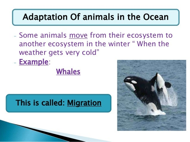 essay on migration of animals This expert paper template explains the problem of migration as well serving as a great tutorial for your successful essay writing on plants along with animals.