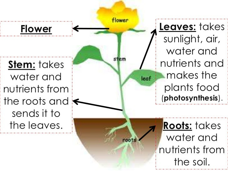 How do plants and animals get energy for What does soil come from