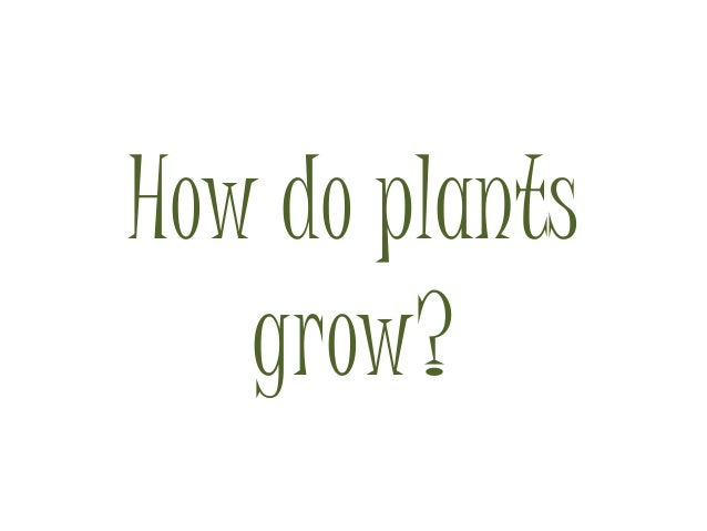 How do plants grow