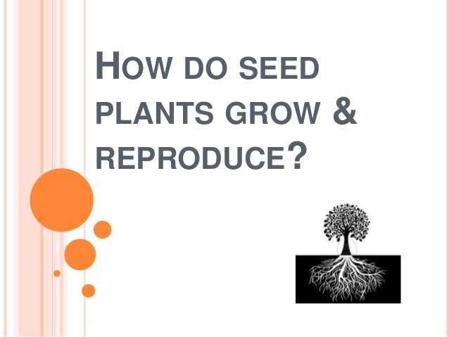 HOW DO SEED PLANTS GROW REPRODUCE?  &