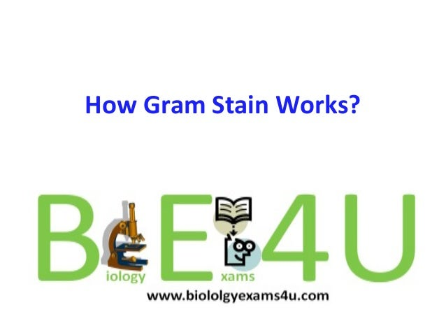 How Gram Stain Works?