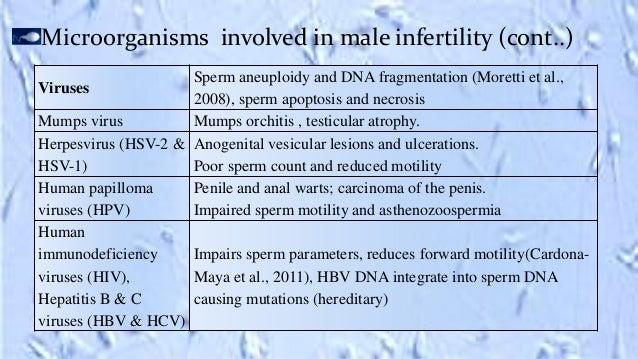 Main predators for sperm whales