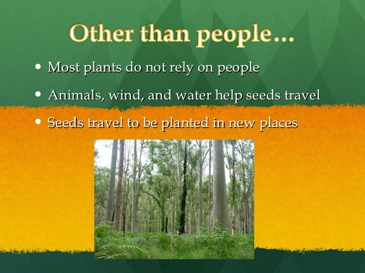 Seeds Travel by Water Water Help Seeds Travel