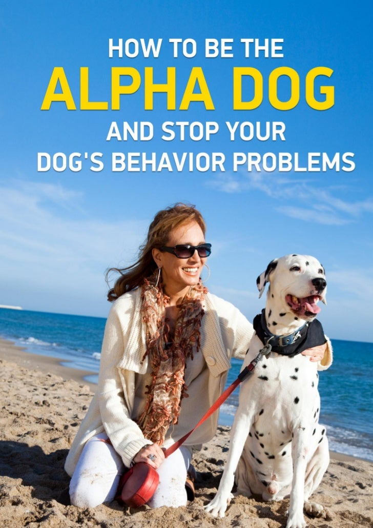 How To Be The Alpha Dog