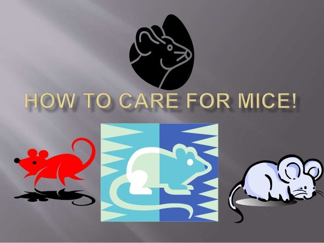 How to care for mice!