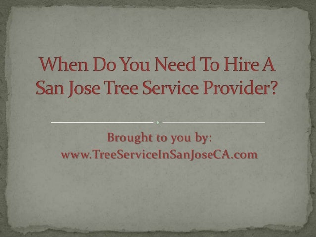 How to Choose a San Jose Tree Service Provider