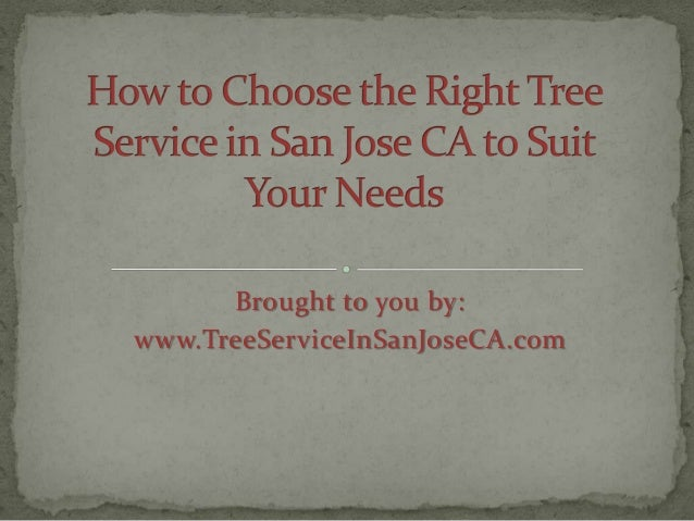 How to Choose the Right Tree Service in San Jose CA to Suit Your Needs