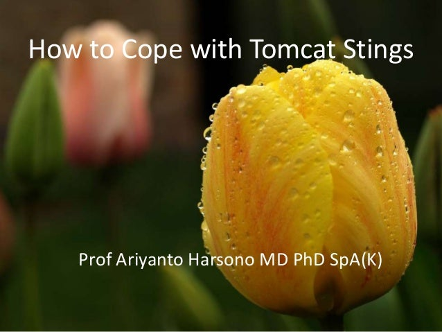 How to Cope with Tomcat Stings  Prof Ariyanto Harsono MD PhD SpA(K)