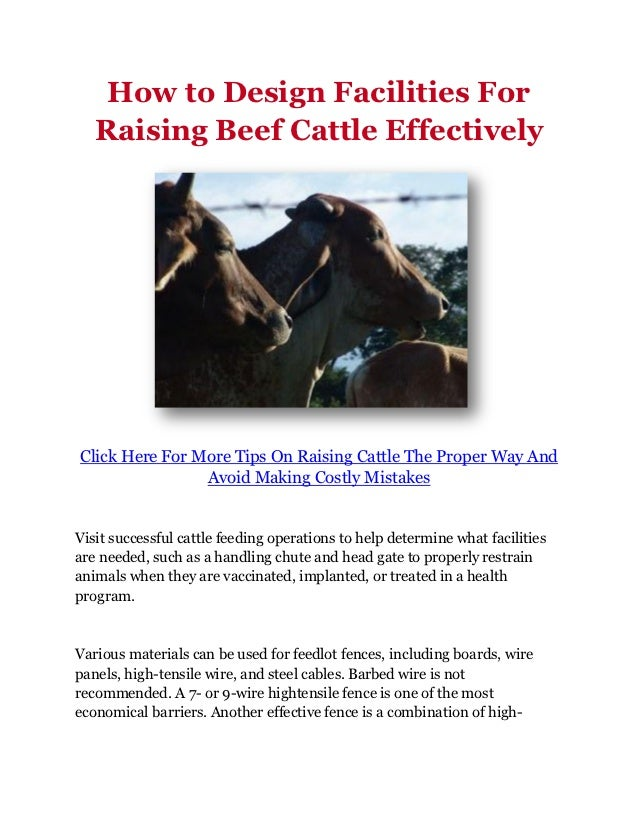 How to Design Facilities For   Raising Beef Cattle EffectivelyClick Here For More Tips On Raising Cattle The Proper Way An...