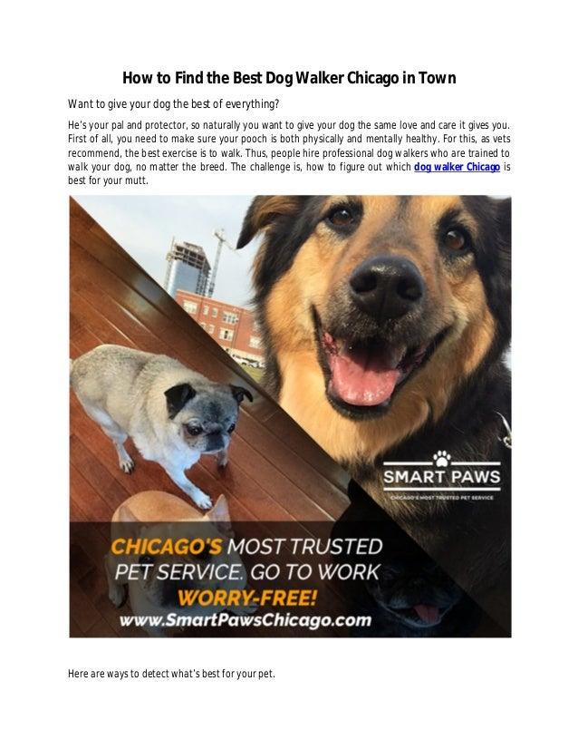 how to find a trustworthy dog walker