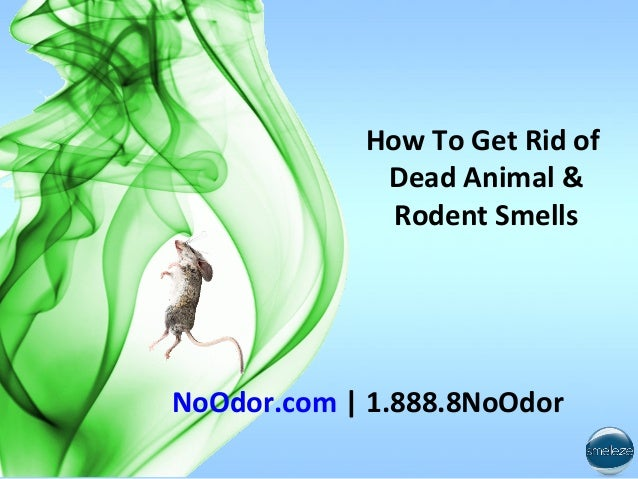 How To Get Rid Of Smell 28 Images How To Get Rid Of