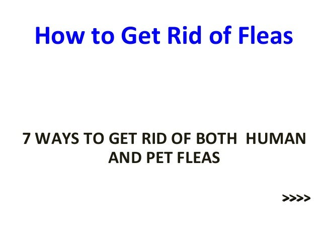 how to get rid of ticks in the house