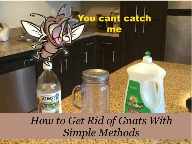 How to get rid of gnats in the house fast 28 images for Getting rid of stuff minimalist