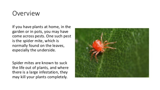 How to get rid of spider mites for How to stop spiders coming in your home