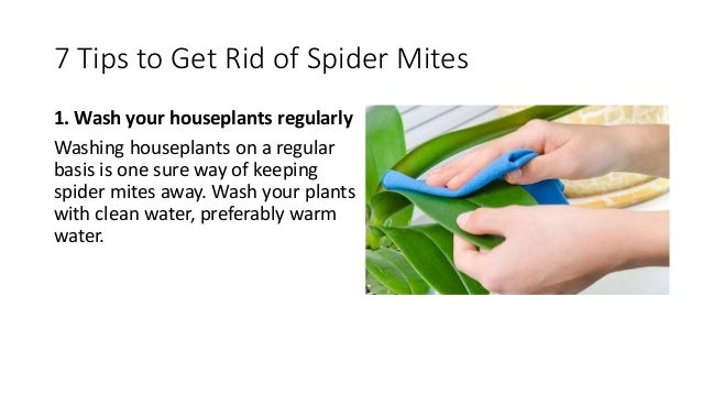 Natural Way To Get Rid Of Spider Mites