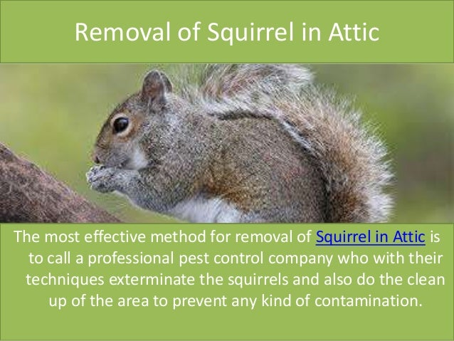 how to clean a squirrel