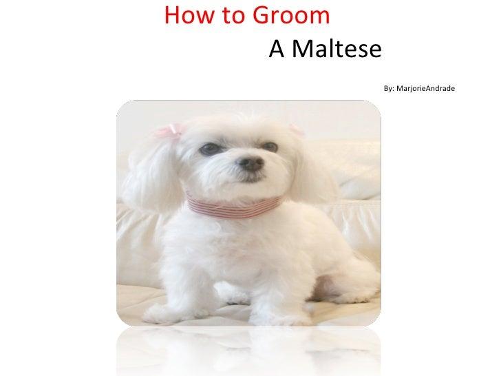 How to groom