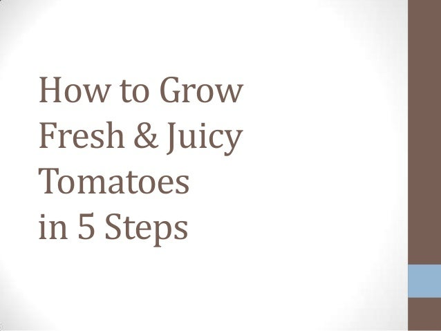 How to Grow Fresh & Juicy Tomatoes