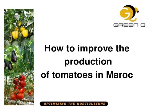 How to improve the production of tomatoes in Maroc