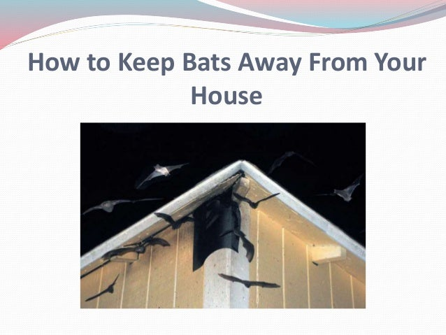How To Keep Mice Away From Your Bed 28 Images How To Keep Mice Away From Your Bed 28 Images