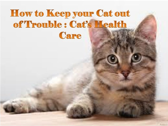 Best 28 How To Keep Your Cat Out Of Your Christmas Tree 5 Ways To Keep Cats Out Of Your
