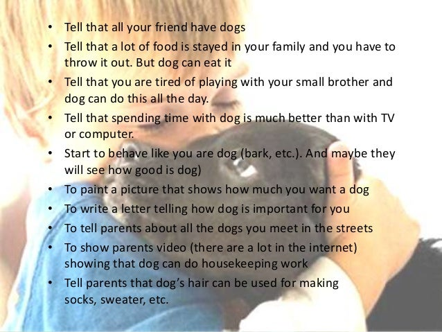 Persuasive Essay for A Dog?