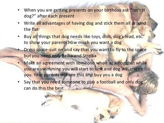 Dog essay english