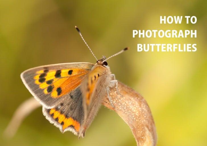 HOW TOPHOTOGRAPH BUTTERFLIES