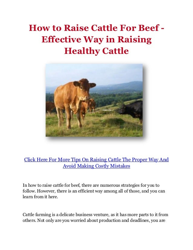 How to Raise Cattle For Beef -     Effective Way in Raising          Healthy CattleClick Here For More Tips On Raising Cat...