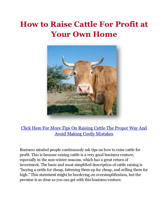 How to Raise Cattle For Profit at Your Own Home