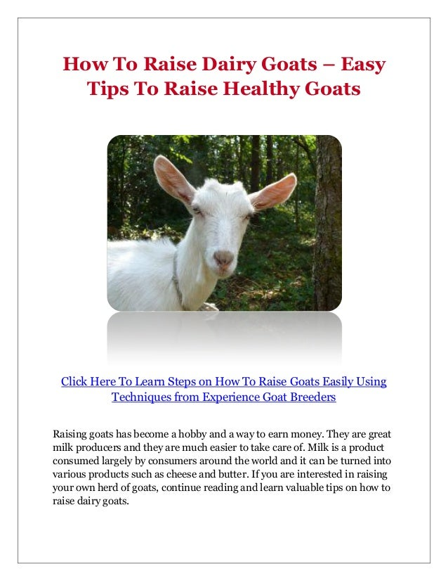 How To Raise Dairy Goats – Easy    Tips To Raise Healthy Goats Click Here To Learn Steps on How To Raise Goats Easily Usin...
