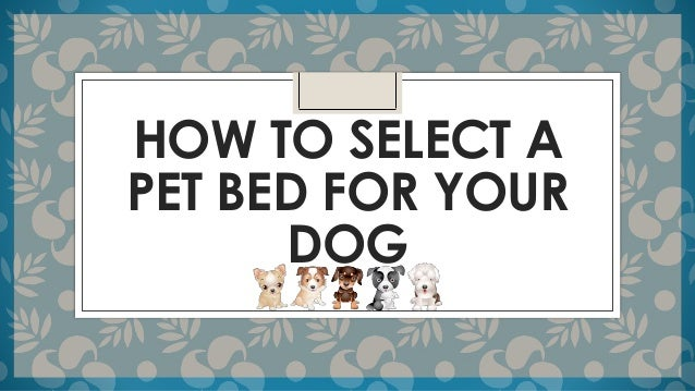 How to select a pet bed for your dog