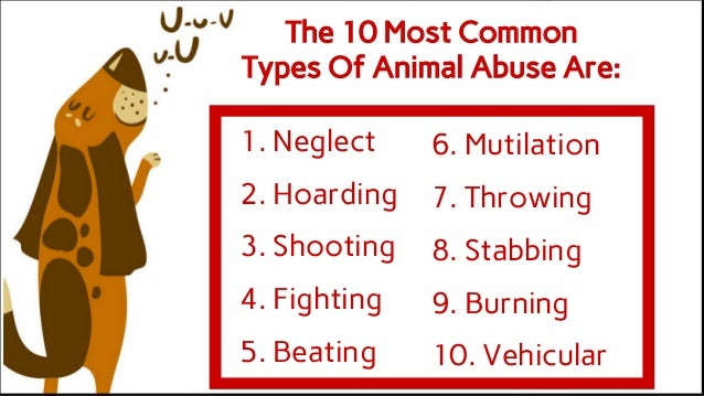 Animal Abuse Statistics Types of Animal Abuse Are