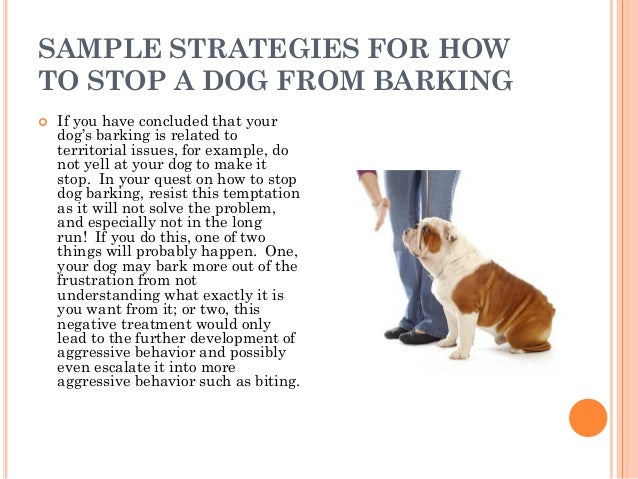 how to stop a dog from barking 6