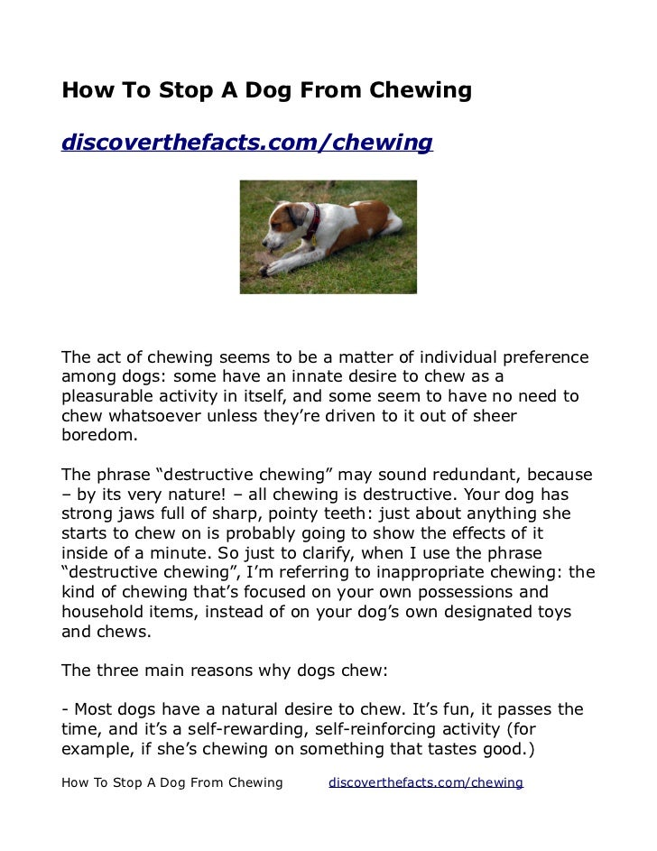 How To Stop A Dog From Chewingdiscoverthefacts.com/chewingThe act of chewing seems to be a matter of individual preference...