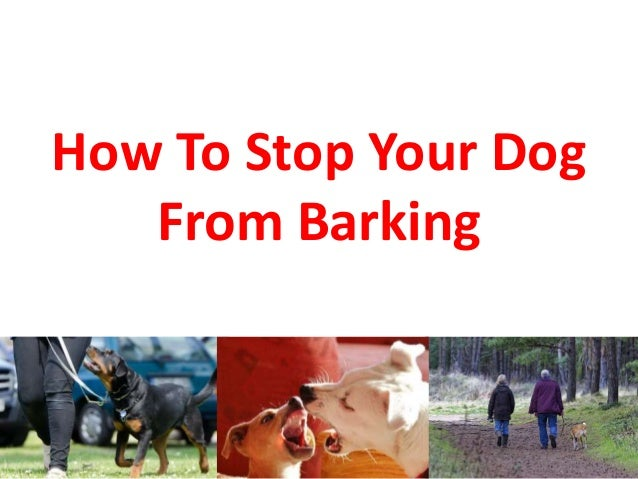 how to stop your dog from barking