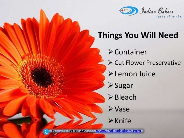 How To Take Care Of Gerbera Flowers When You Buy Them Online