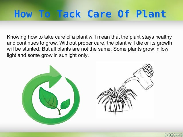 How To Take Care Of Plant Plants Galore Online Uk