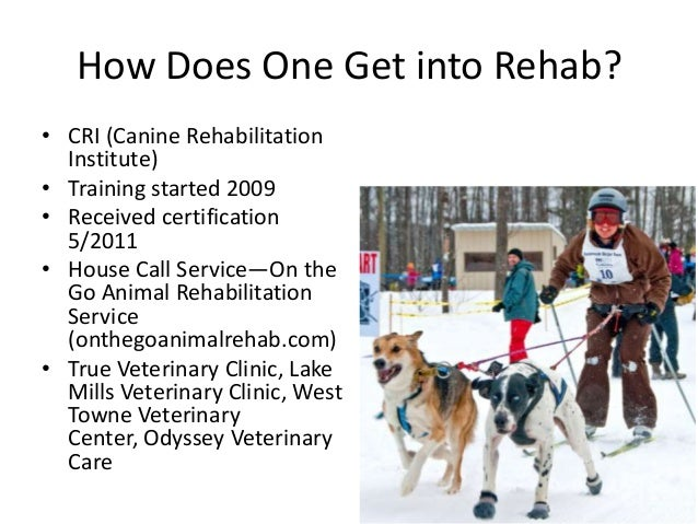 How Does One Get into Rehab? • CRI (Canine Rehabilitation Institute) • Training started 2009 • Received certification 5/20...