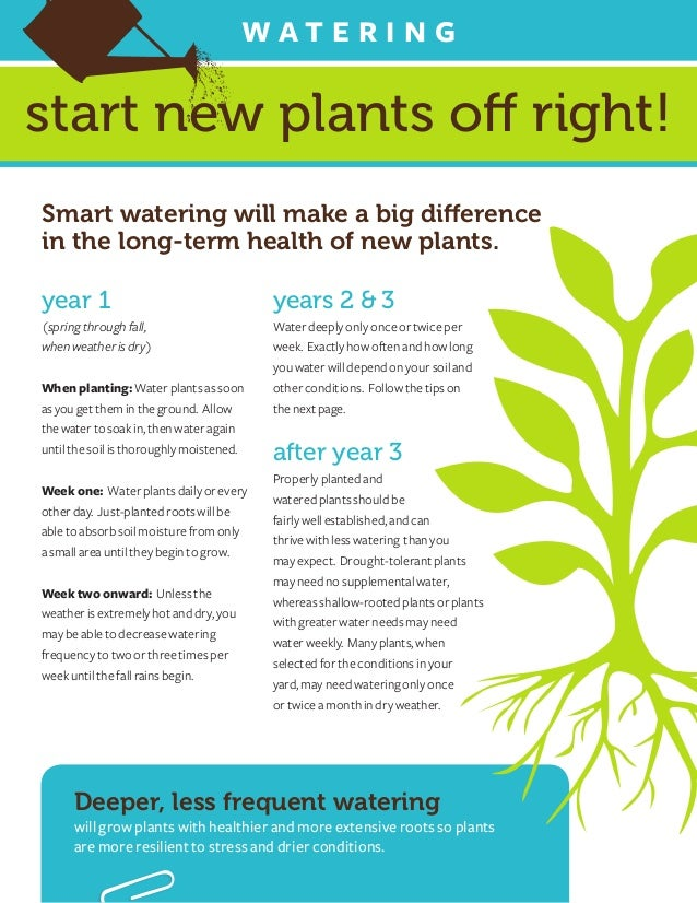 Wat e r i n gstart new plants off right!Smart watering will make a big differencein the long-term health of new plants.yea...