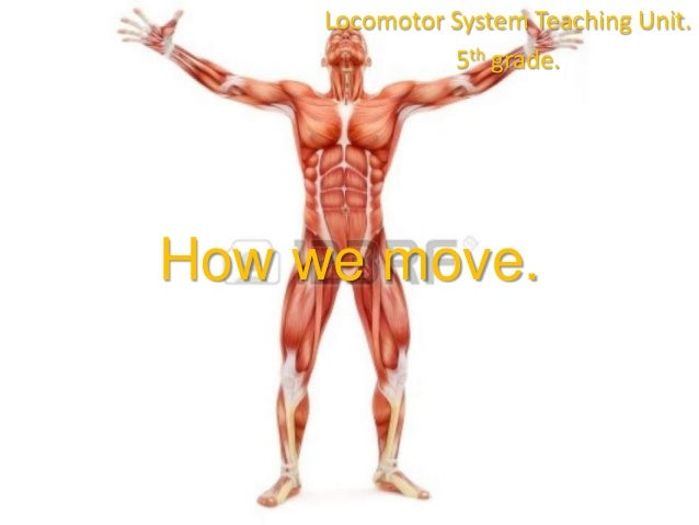 Locomotor System Teaching Unit. 5th grade.  How we move.
