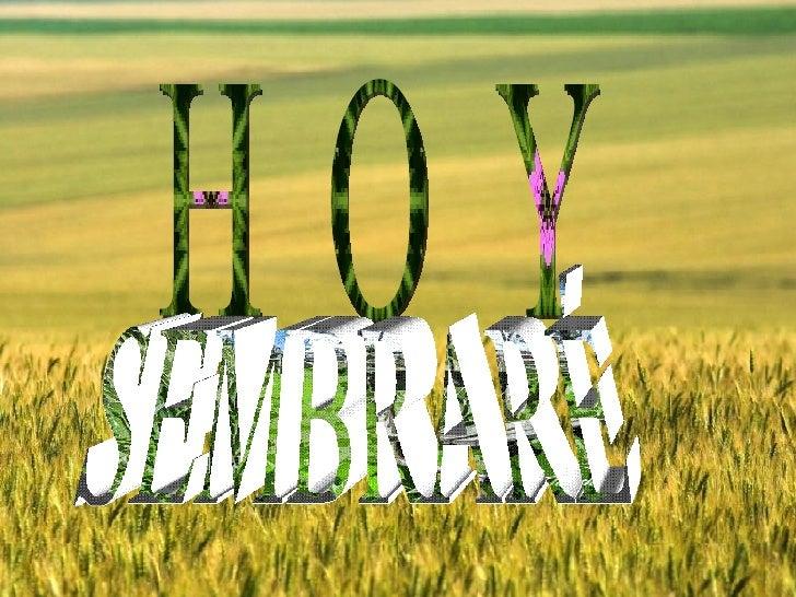 H O Y SEMBRARÉ