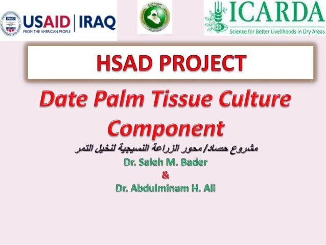 The History of Date Palm in Iraq. • Iraq used to be the main producing and exporting country in the world. It occupied an ...