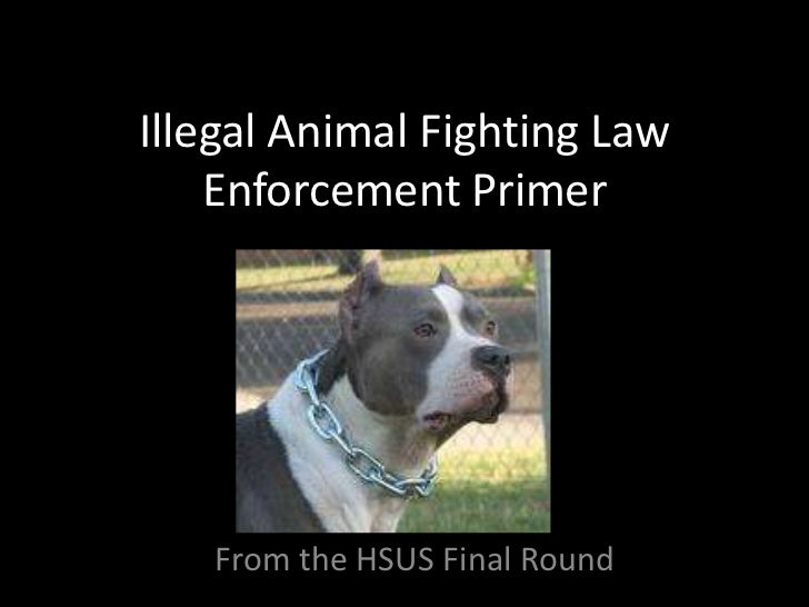 Illegal Animal Fighting Law    Enforcement Primer   From the HSUS Final Round