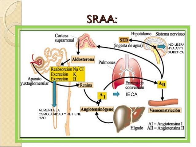definicion hormonas esteroides