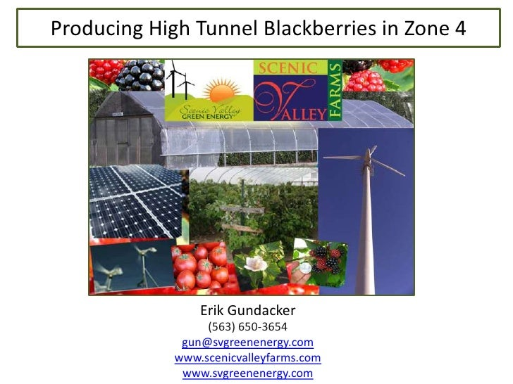 Producing High Tunnel Blackberries in Zone 4<br />Erik Gundacker<br />(563) 650-3654<br />gun@svgreenenergy.com<br />www.s...
