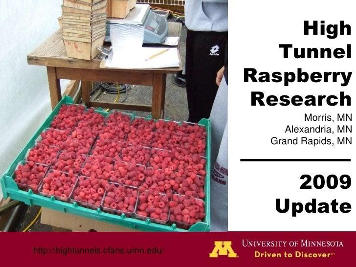 High Tunnel Raspberry ResearchMorris, MNAlexandria, MNGrand Rapids, MN2009 Update<br />